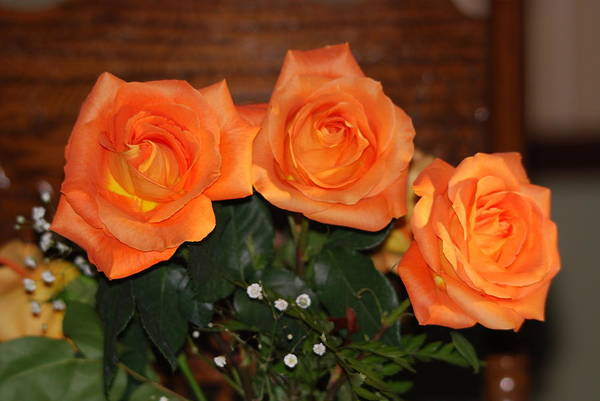 Roses Art Print featuring the photograph Orange Roses With Babysbreath by Joe Lee
