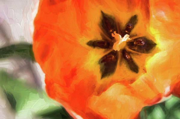 Mom's Garden Art Print featuring the photograph Orange Tulip Bloom by Andrea Kappler