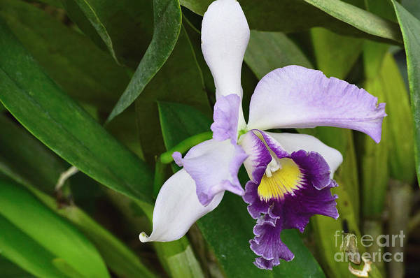 Nature Art Print featuring the photograph Orchid Expression 3892 by Alex Wencelblat