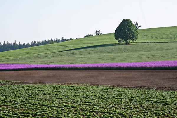 Flowers Art Print featuring the photograph Oregon Flower Farm by Liz Santie