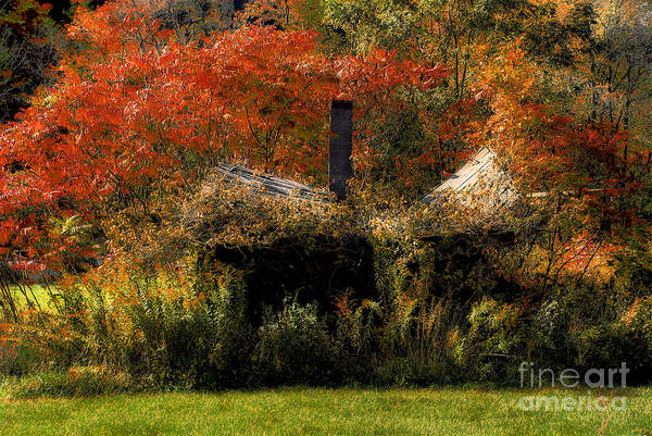 House Art Print featuring the photograph Ouch by Lois Bryan