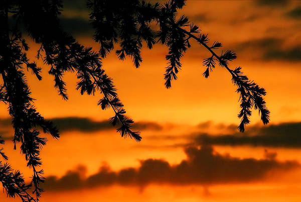 Sunset Art Print featuring the photograph Out Reaching by Karen Scovill