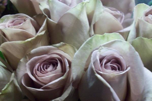 Art Print featuring the photograph Pale Roses by Stacy Devanney