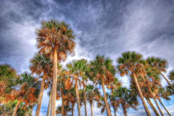 Beaufort Art Print featuring the photograph Palm Grove by E R Smith