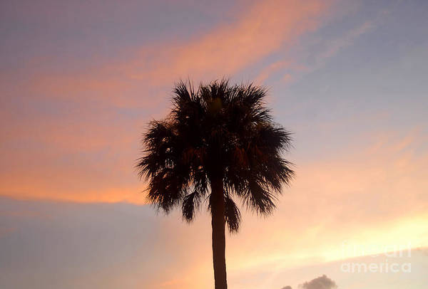 Palm Tree Art Print featuring the photograph Palm Sky by David Lee Thompson