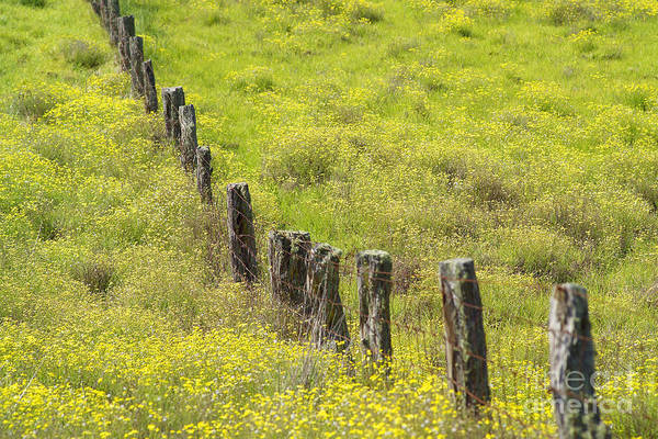Abstract Art Print featuring the photograph Parker Ranch Fence by Carl Shaneff - Printscapes