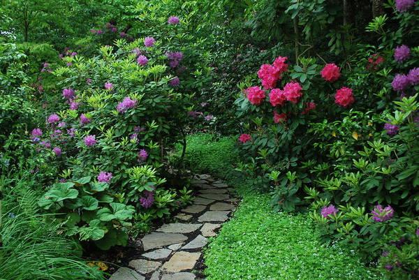 Garden Art Print featuring the photograph Path To Hidden Valley by Linda Sramek