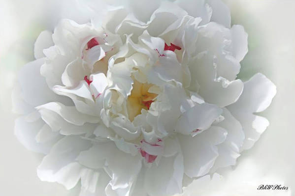 Peony Art Print featuring the photograph Peony by Bonnie Willis