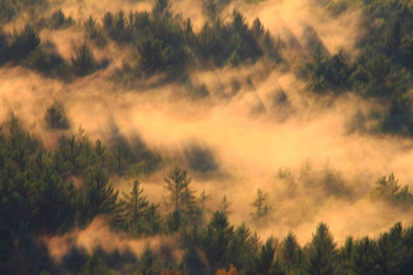 Forest Art Print featuring the photograph Pine Forest And Fog by John Burk