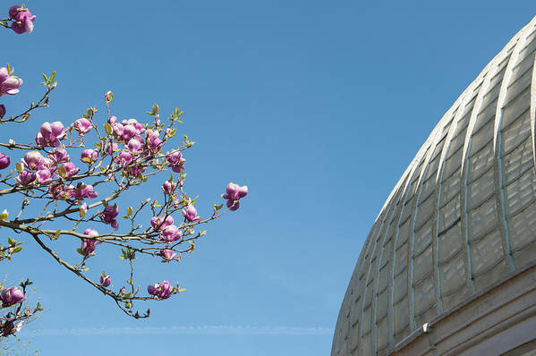 Blossom Art Print featuring the photograph Pink Blossom And Glasshouse by Helen Northcott