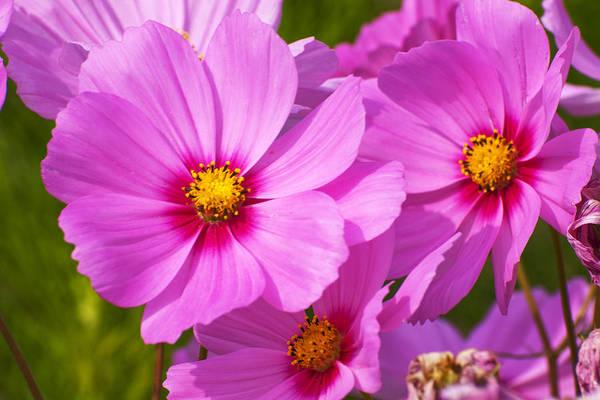 Flower Art Print featuring the photograph Pink Flower Conspirisy by Richard Henne