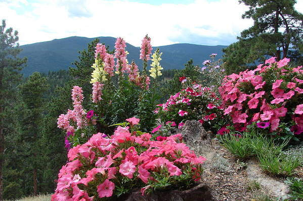 Pink Art Print featuring the photograph Pink On The Mountain by Jody Neumann