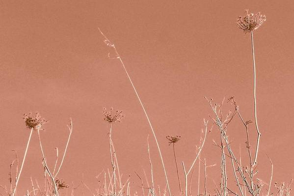 Art Print featuring the photograph Pink Sky by Filipa Mendes