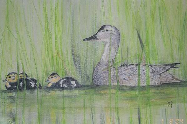 Pintail Ducks Art Print featuring the painting Pintails In The Reeds by Debra Sandstrom