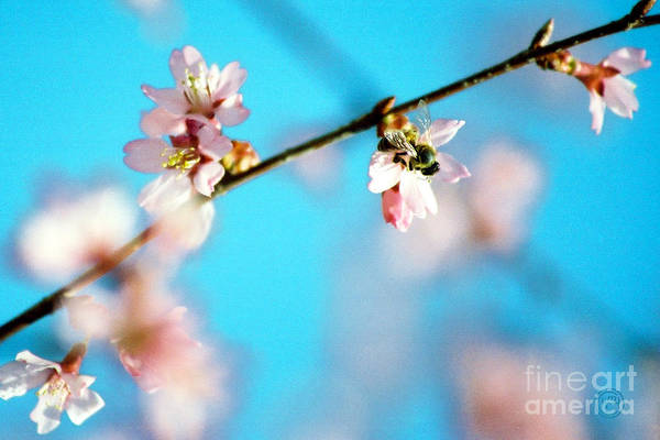 Floral Animal Wildlife Insect Art Print featuring the photograph Pollination 1.03 by Helena M Langley
