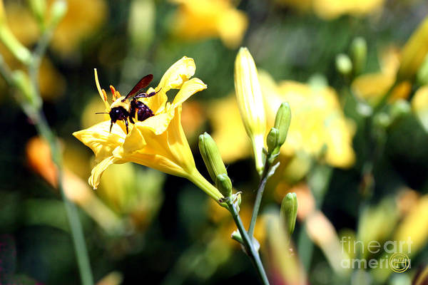Floral Animal Wildlife Insect Art Print featuring the photograph Pollination 2 by Helena M Langley