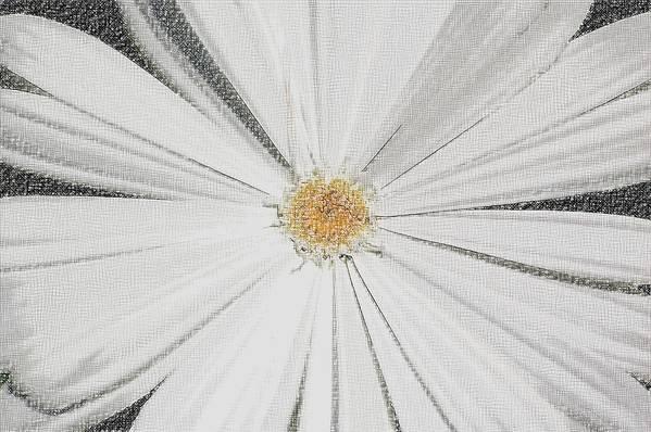 Daisy Art Print featuring the photograph Puckered Daisy by Jennifer Englehardt