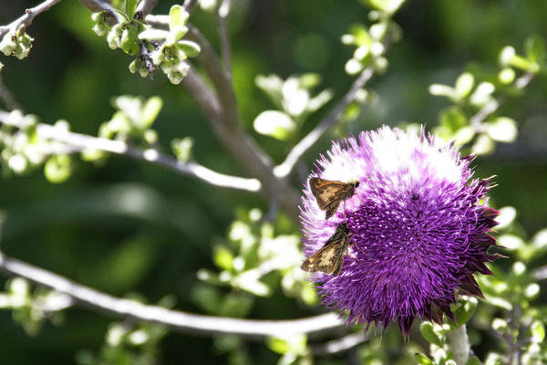 Butterfly Art Print featuring the photograph Purple Blossom by Doc Hafferty