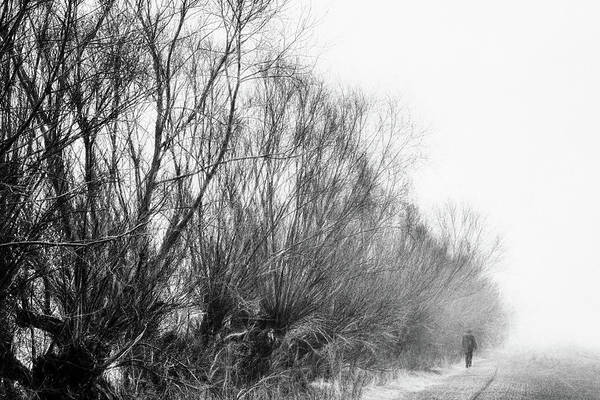 Trees Art Print featuring the photograph Quiet - Impressionist Street Photography by Frank Andree