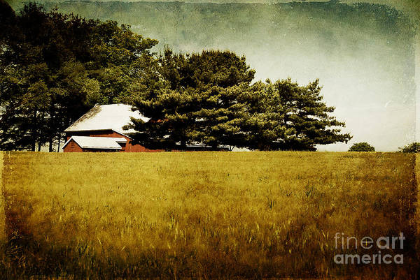 Barn Art Print featuring the photograph Quiet by Lois Bryan