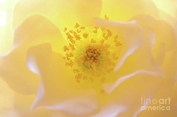 Flower Art Print featuring the photograph Radiant Gift by Julia Hiebaum