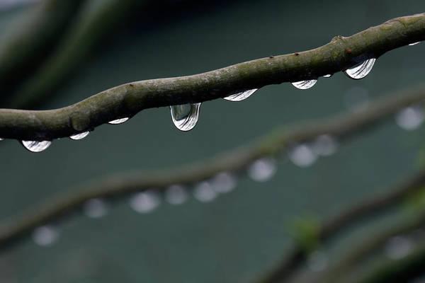 Horizontal Art Print featuring the photograph Rain Branch by Photography by Gordana Adamovic Mladenovic