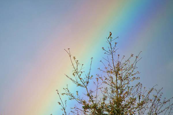 Rainbow Art Print featuring the photograph Rainbow by Laurie Hasan