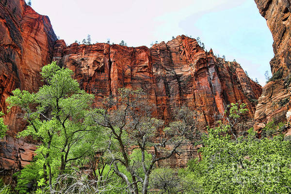 Zion National Park Art Print featuring the photograph Red Mountains Zion National Park Usa by Chuck Kuhn