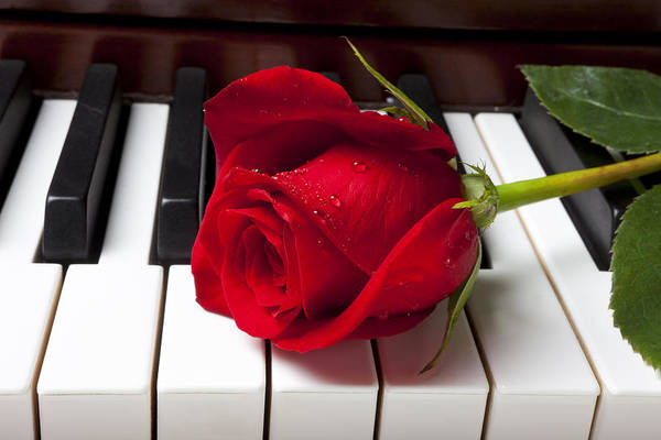 Red Rose Roses Art Print featuring the photograph Red Rose On Piano Keys by Garry Gay