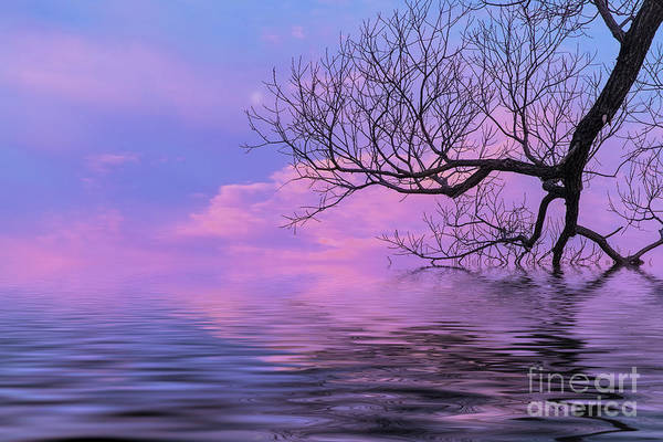 Waterscape Art Print featuring the photograph Reflecting On Life by Nancy Marie Ricketts