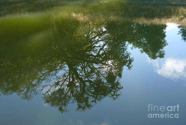 Reflection Art Print featuring the photograph Reflection by JoAnn SkyWatcher