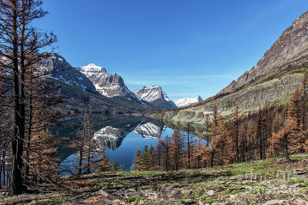 Lake Art Print featuring the photograph Reflection On St Mary Lake Through Burned Trees by Heavens Peak