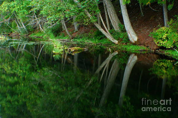 Forest Art Print featuring the photograph Reflections Of A Forest by Idaho Scenic Images Linda Lantzy