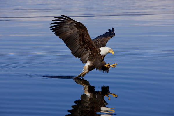 Afternoon Art Print featuring the photograph Reflections Of Eagle by John Hyde - Printscapes