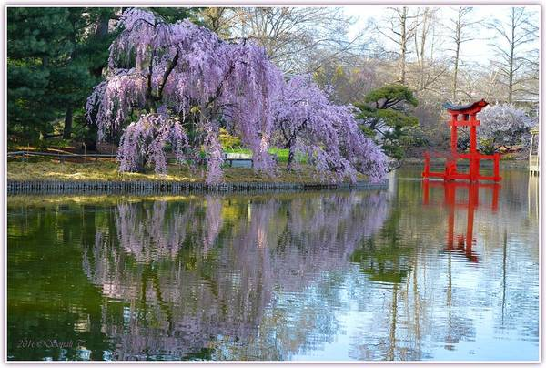 Reflections Of Spring Art Print featuring the photograph Reflections Of Spring by Sonali Gangane