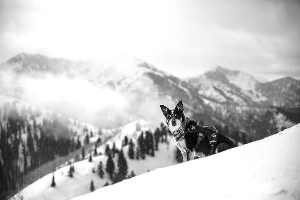 Black And White Art Print featuring the photograph Rescue Dog by Billy Soden