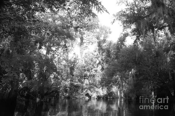 Black Art Print featuring the photograph River Wooded by Jack Norton