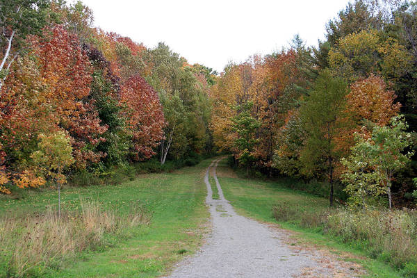 Maine Art Print featuring the photograph Road Less Traveled by George Jones