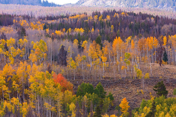 Trees Art Print featuring the photograph Rocky Mountain Autumn View by James BO Insogna