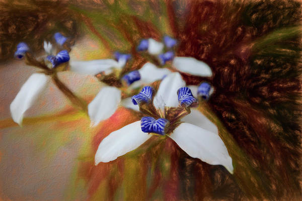 Appalachia Art Print featuring the photograph Romantic Textured Island Lilies by Debra and Dave Vanderlaan