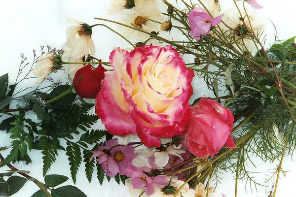 Roses Art Print featuring the photograph Roses In The Snow by Bob Gardner