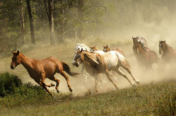 Horses Art Print featuring the photograph Running Horses by Scott Read