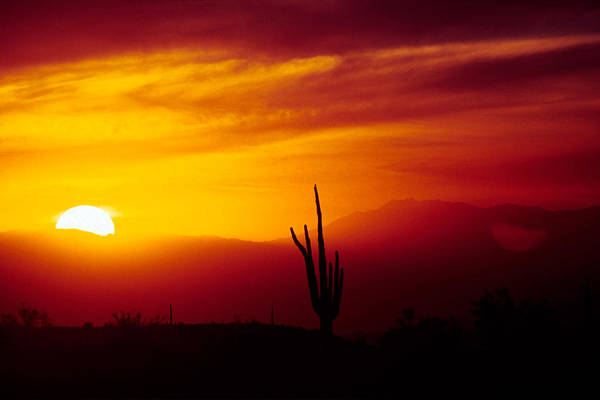 Arizona Art Print featuring the photograph Saguaro Sunset by Randy Oberg
