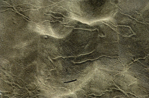 Sand Art Print featuring the photograph Sand Painting by Donna Blackhall