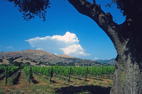 Landscape Art Print featuring the photograph Santa Ynez Vineyard View by Kathy Yates
