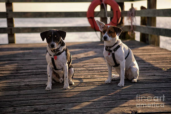 Dogs Art Print featuring the photograph Sea Dogs by Karen Goodwin