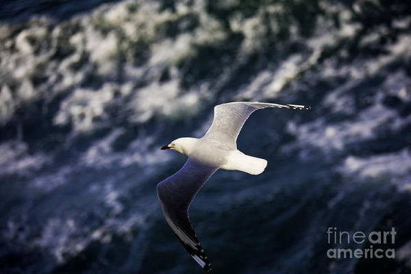 Seagull Art Print featuring the photograph Seagull In Wake by Avalon Fine Art Photography