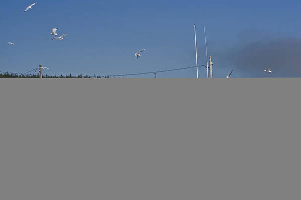 Fishing Boat Art Print featuring the photograph Seagulls Flying By Fishing Boat by Sven Brogren