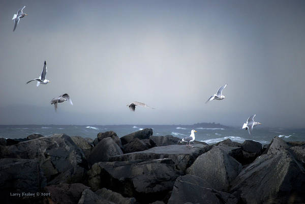 Landscape Art Print featuring the photograph Seagulls In Flight by Larry Keahey