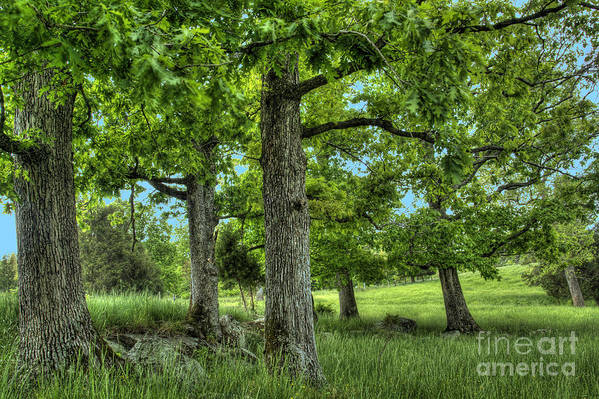 Peace Project Art Print featuring the photograph Shade Trees by Pete Hellmann